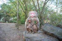 Safaripark Beekse Bergen (1)